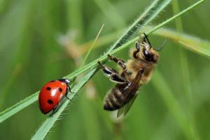 Bee & Ladybug
