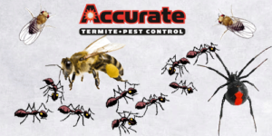 Common Pest in Southern California - Accurate Termite and Pest Control