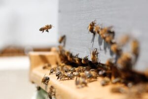 Do You Have a Bee Infestation Accurate 2020