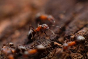 Fire Ants Accurate Blog