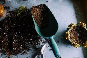 Garden Worms - Accurate Termite & Pest Control