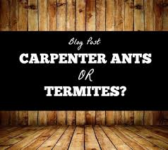 How do you tell the difference between an ant and a termite? - Accurate Termite and Pest Control