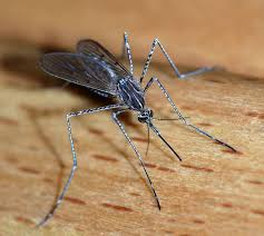 Mosquito-bourne Zika Virus - Accurate Termite and Pest Control
