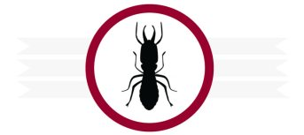 Quality Termite Control in Orange County - Accurate Termite and Pest Control