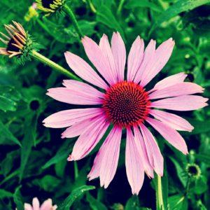 keep pests away, garden, how to