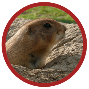 gopher pest control in your yard