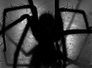 scariest bugs
