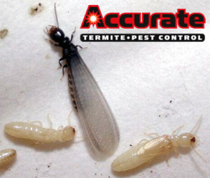 Swarmer - Accurate Termite and Pest Control